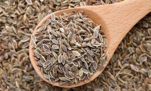 Семена укропа: полезные свойства, как заваривать и принимать