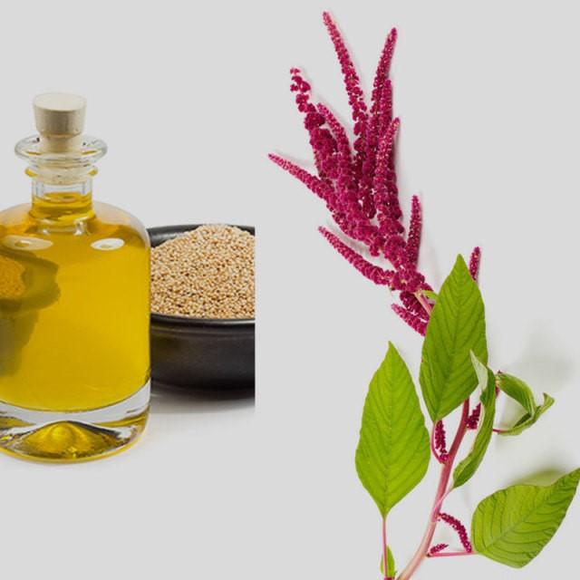 Амарантовое масло польза и вред отзывы