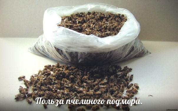 Подмор пчелиный настойка на спирту отзывы