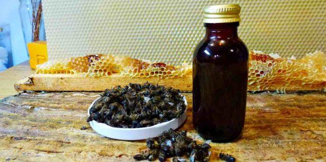Как пить настой подмора пчел