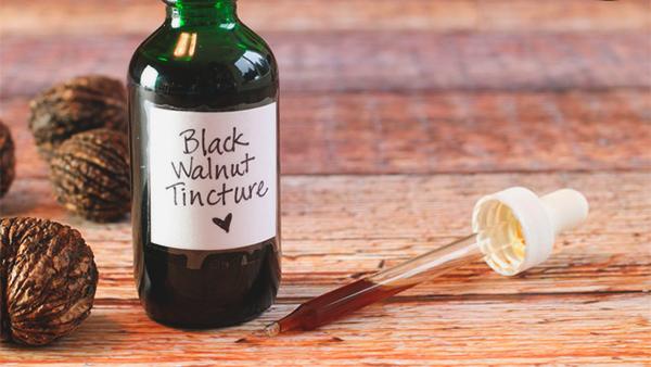 Черный грецкий орех полезные свойства