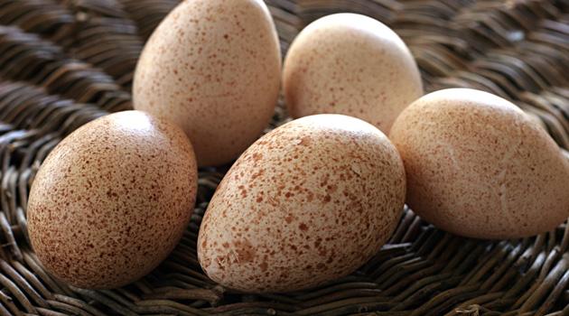 Какие яйца полезнее куриные или индюшиные