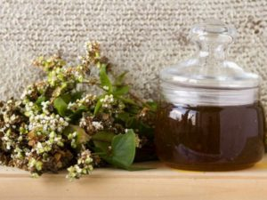 Как выглядит гречишный мед и его отличительные черты