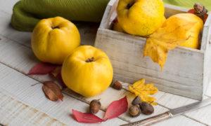Айва — 13 полезных свойств и противопоказания для здоровья