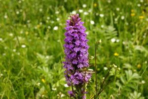 Орхидея фаленопсис – уход, пересадка и размножение в домашних условиях