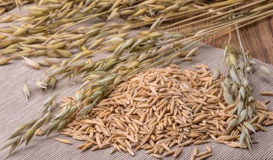 Толокно овсяное: полезные свойства и противопоказания, из чего его делают, а также рецепты приготовления