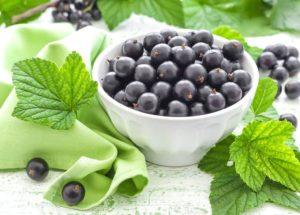Черная смородина лечебные свойства и противопоказания для женщин