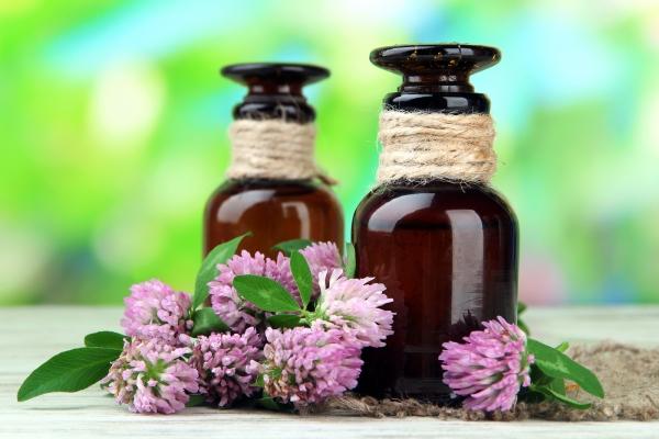 Цветы клевера: лечебные свойства и противопоказания, применение в народной медицине