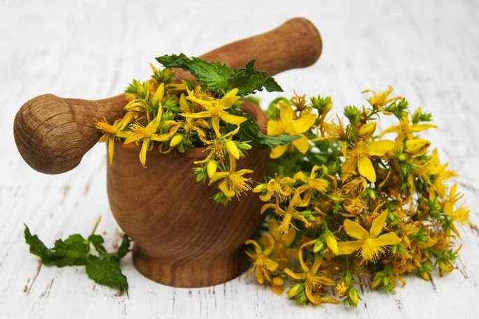 Растение зверобой лечебные свойства