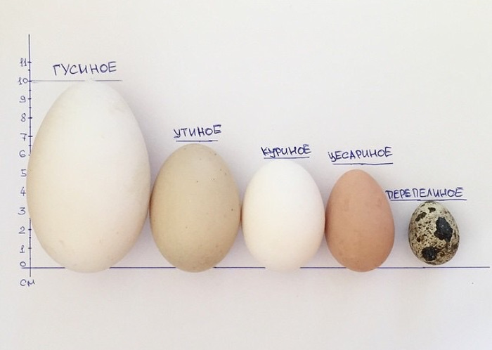 Какие яйца у цесарок