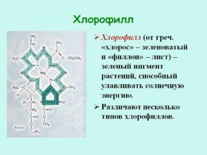 Польза хлорофилла для организма: лучший детоксифицирующий растительный пигмент