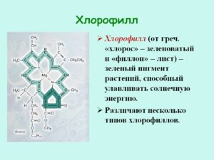 Хлорофилл при гриппе