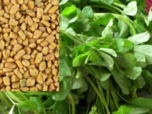 Хильба и ёё польза для женщин! Семена или масло?