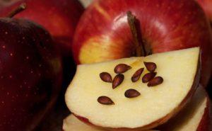 Яблочные семечки польза и вред