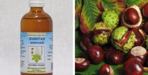 Каштан конский – полезные свойства и применение конского каштана, настойка каштана, плоды каштана, экстракт каштана