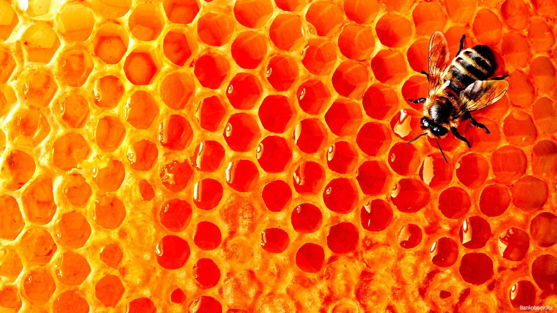 Как делается мед в сотах