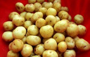 Картофельный отвар при язве желудка