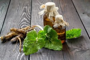 Семя лопуха лечебные свойства