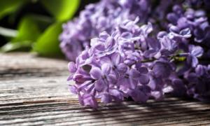 Варенье из цветов сирени отзывы — pic 9
