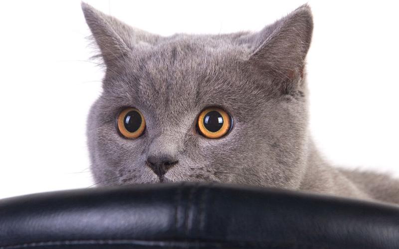 Как избавиться от запаха кошачьей мочи в квартире в домашних условиях, как убрать запах кошачьей мочи в квартире