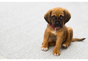 Как удалить запах собачьей мочи в квартире