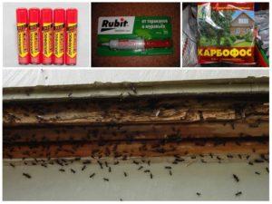 Как избавиться от муравьев в доме и квартире, вывести домашних муравьев навсегда самостоятельно, эффективные средства