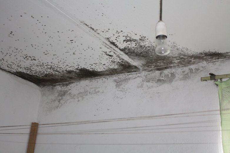 картинки плесень на потолке приезжают