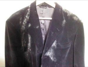 Чем вывести пятно плесени с одежды в домашних условиях, как убрать плесень навсегда
