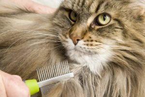 Витамины для кошачьей шерсти