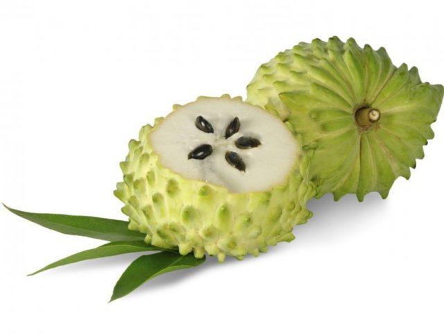 Гуанабана фрукт где растет