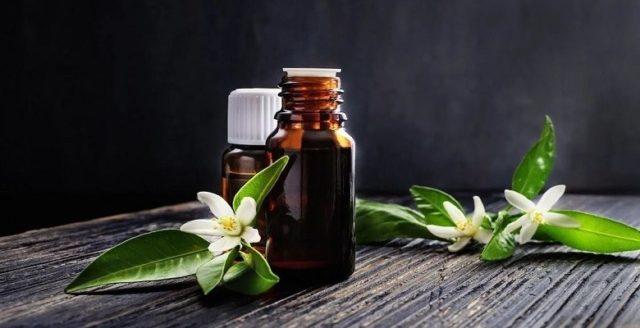Эфирное масло нероли - полезные свойства и применение ценного аромамасла