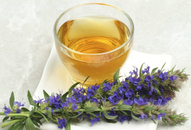 Иссоп: лечебные свойства и противопоказания приема травы для женщин