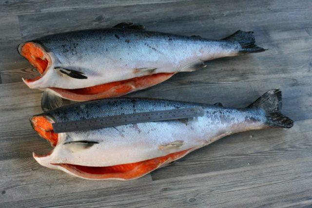 Какая рыба лучше нерка или кижуч. Рыба кижуч: польза и вред, отзывы потребителей, рецепты