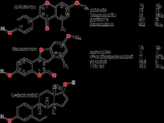 Что относится к фитоэстрогенам