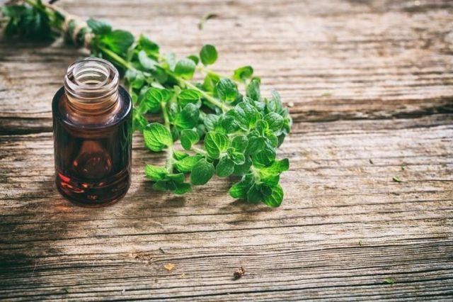 Эфирное масло душицы противопоказания thumbnail