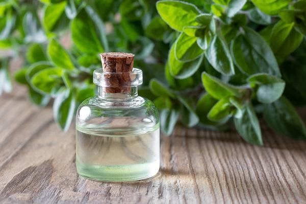 Эфирное масло душицы противопоказания