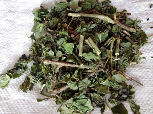 БЕЛЛАДОНА - фото лекарственного растения, применение