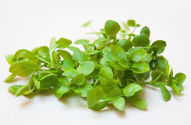 Трава мокрица лечебные свойства при лечении суставов