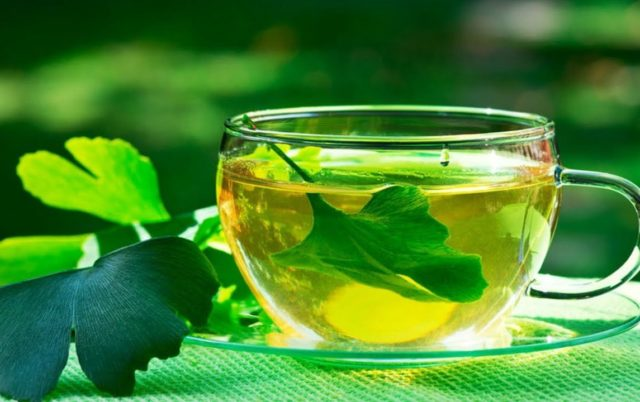 Чай гинкго билоба польза и вред