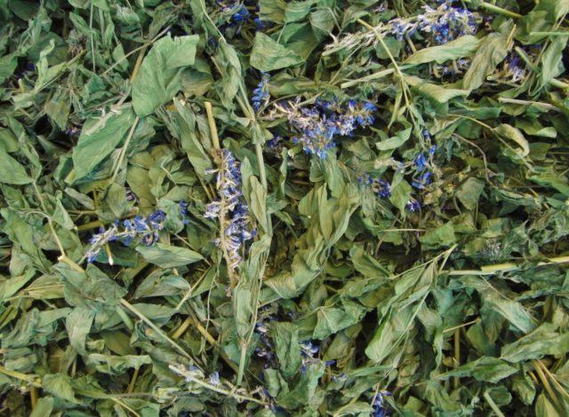 Козлятник лекарственный при диабете: лечебные свойства травы Галеги, применение и противопоказания
